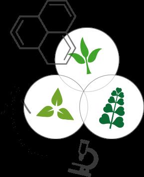 Le mélange des plantes, un savoir-faire ancestral