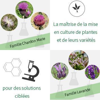 Des variants botaniques ciblés pour mieux préserver l'immunité animale
