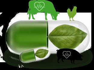 La phytothérapie pour améliorer la santé animale